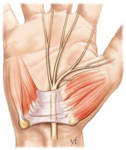 photo 1canal carpien anatomie